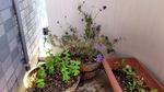 120627_lavender.jpg