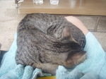 120313_21sleepingcat.jpg